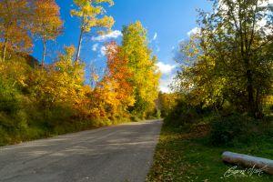Strada_autunno_pietralta_MG_0044-c54.jpg